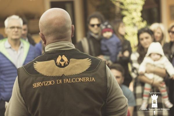 Spettacolo Falconeria